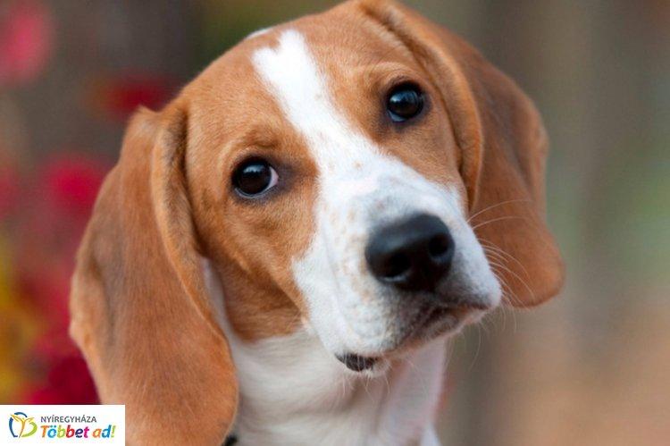 Szalmonella szennyezettség miatt hív vissza kutyaeledelt a Fressnapf üzletlánc