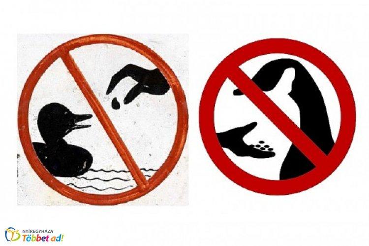 Felhívják a lakosság figyelmét! – Ne etessük a vízimadarakat!