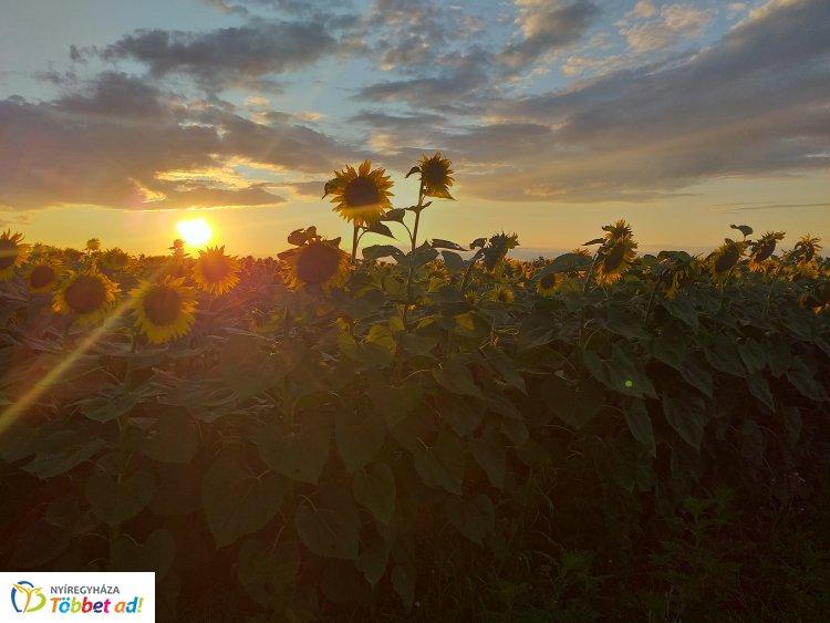 Varázslatos naplemente – Ma este is csodás látvány vár Nyíregyháza határában, mutatjuk!