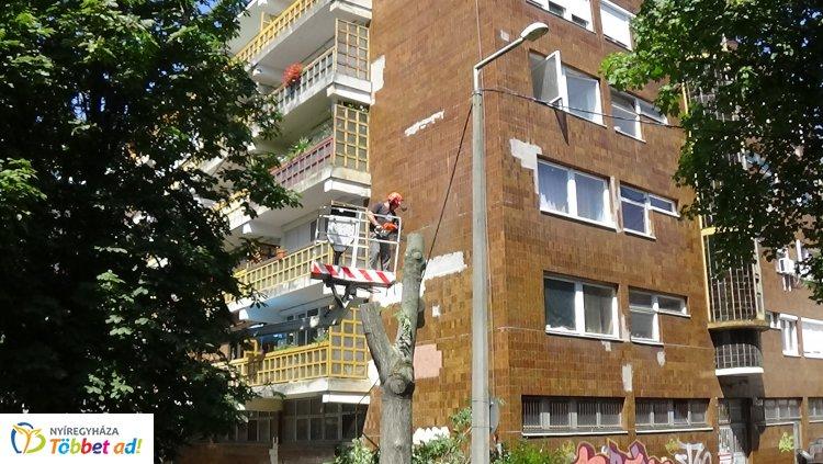Áramkimaradást okozott több fa gyökérzete a Kürt utcán, eltávolítják őket