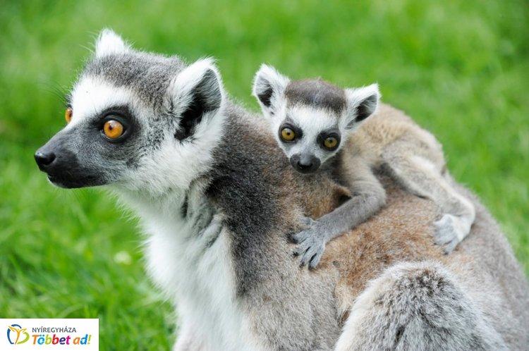 VIP túra a Nyíregyházi Állatparkban – Kulisszatitkok és etetés!