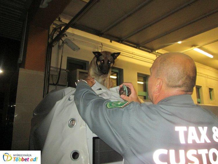 Ella szimata nem csalt – 11 milliós csempészárut szagolt ki a NAV cigarettakereső kutyája
