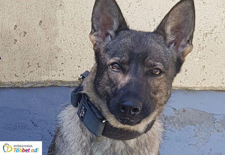 Kábítószer a lónyai határon – Dyna, a szolgálati kutya megtalálta!