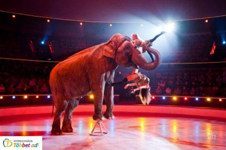 Felejthetetlen kikapcsolódás kicsiknek és nagyoknak: Nyíregyházán az Eötvös Cirkusz