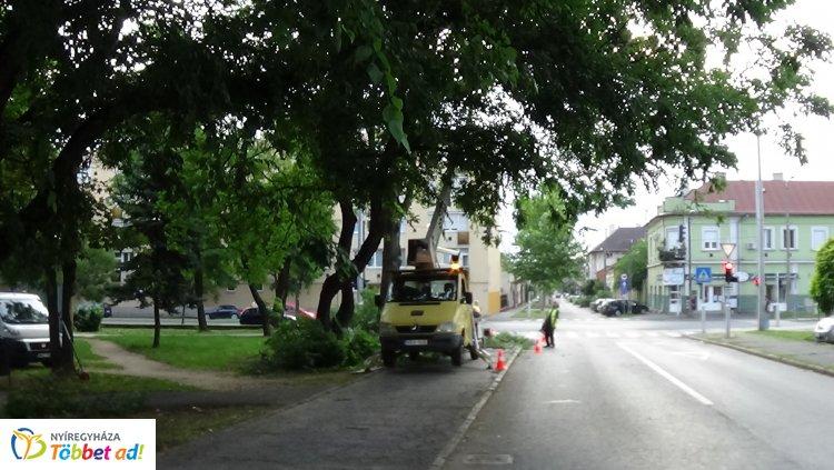 Faápolási munkákat végeztek a Nyírvv kft. munkatársai a Petőfi téren