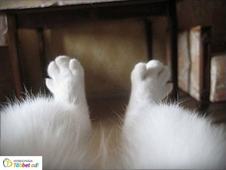 Egy kiszáradt kútba esett macskát mentettek meg a megye tűzoltói Petneházán
