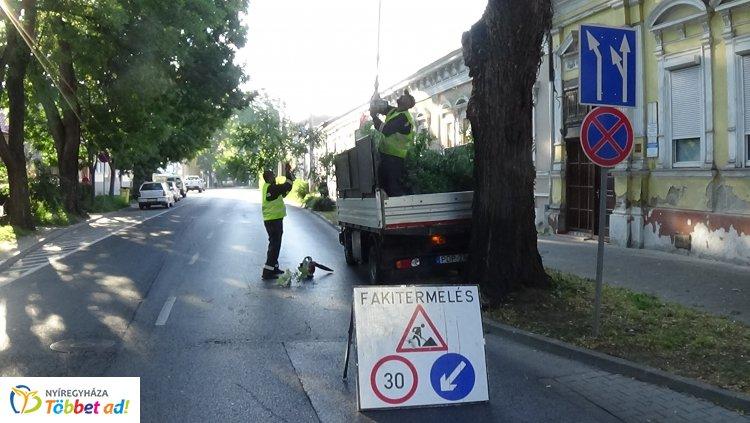 Forgalomkorlátozás mellett gallyazási munkálatokat végeznek a Szent István utcán