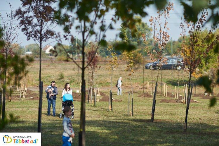 """Ősszel is folytatódik az """"Ültess fát a holnapért"""" akció - Plusz 573 fa, 2049 cserje"""