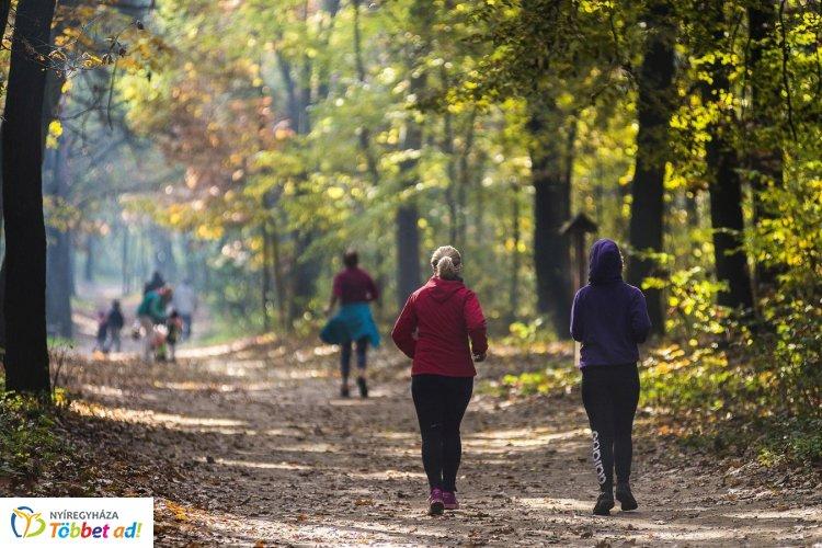 NYÍRERDŐ Nap Nyíregyházán - egész napos programok a Sóstói-erdőben