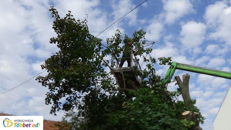 A Jég és a Nyírfa utcán is favágási munkálatokat végeztek ma a NYÍRVV szakemberei