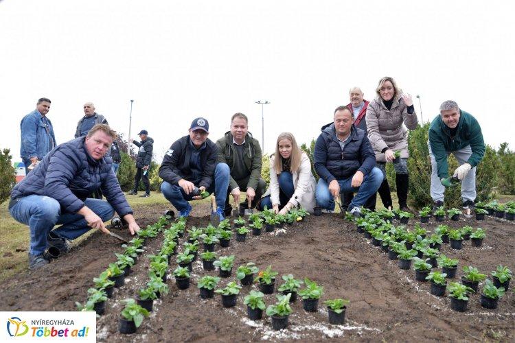 A Kertváros zöldebb lett - Több mint ezer növényt ültettek el
