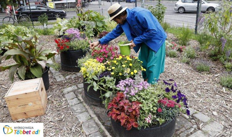 Hogyan készítsük fel növényeinket a következő szezonra ősszel?