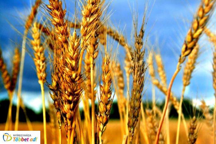 Mi lesz veled agrárium? – Szakmai napot rendezett a Primom és a Nyíregyházi Egyetem