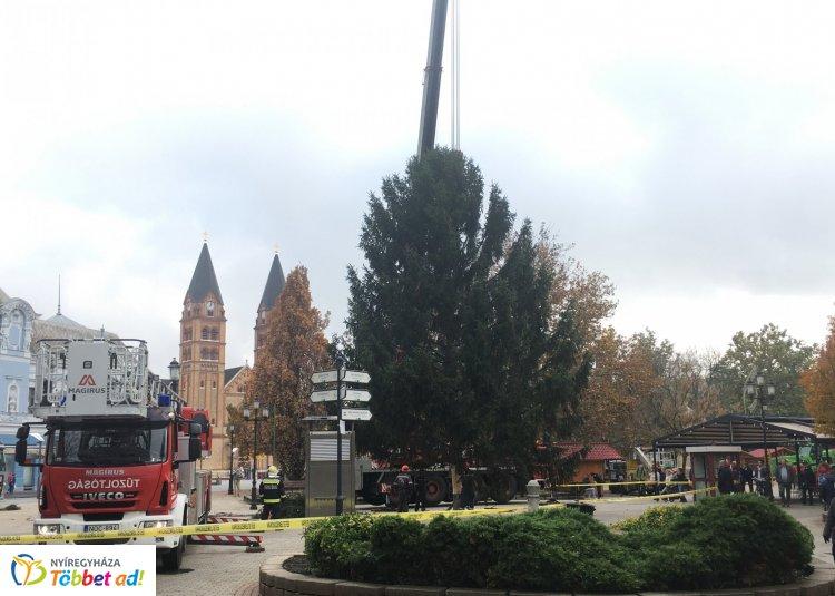 Péntek délután helyére került a  2019-es városi karácsonyfa – 16 méter!