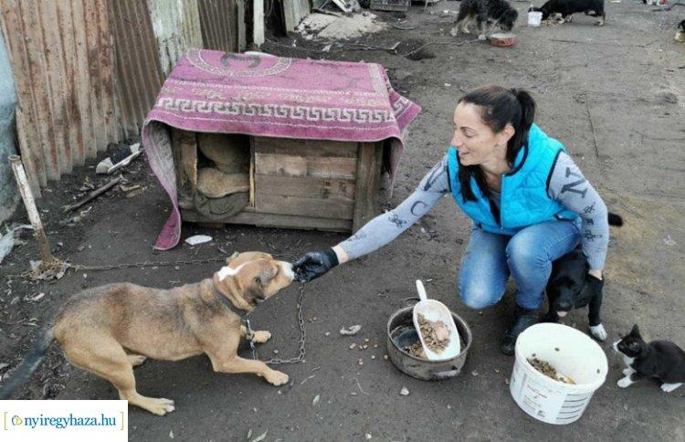 Jót tenni jó! Jótékonysági torna a kóbor állatok megsegítésére, a Jósavárosi Művelődési Házban