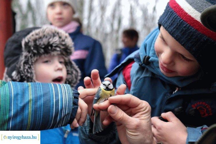 Madárkalács-készítés és madárgyűrűzés? Újra lesz Madárkarácsony a Sóstói-erdőben!