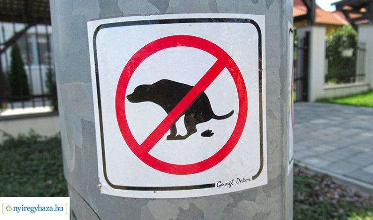 Kutyapiszok a nyíregyházi lakóövezetekben – Felháborító és veszélyes!