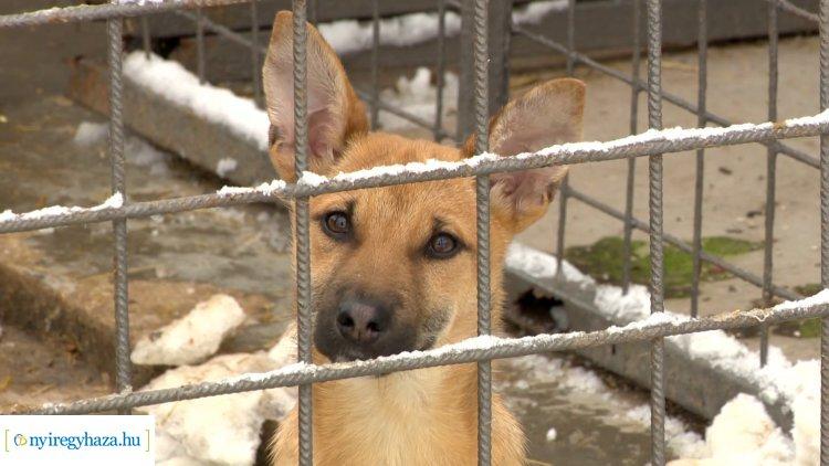 Karácsonyi börze az Állatbarát Alapítványál-Még érdemes ellátogatni a menhely telephelyére