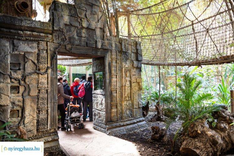 Télből a nyárba – Irány a Nyíregyházi Állatpark Zöld Piramisa, a trópusi meleg garantált