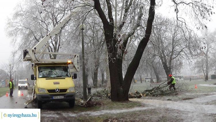 Így távolítják el a veszélyes, széthasadt fákat a NYÍRVV munkatársai – A tél sem akadály!