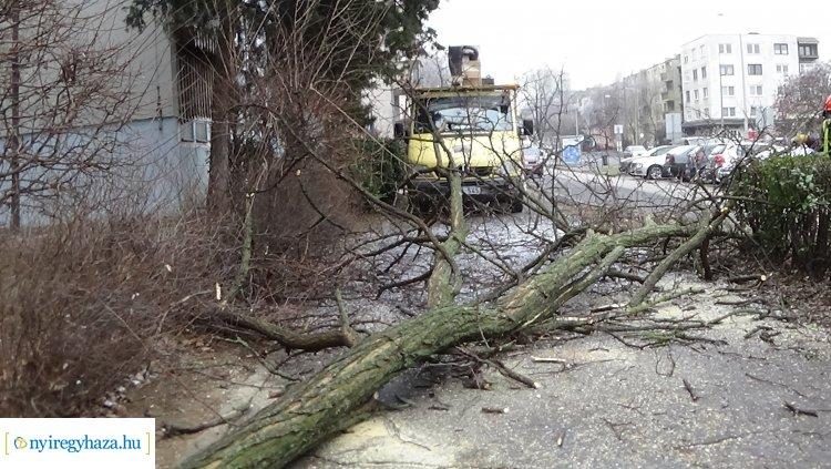 Balesetveszélyes fákat vágtak ki a NYÍRVV munkatársai a Kossuth utcán