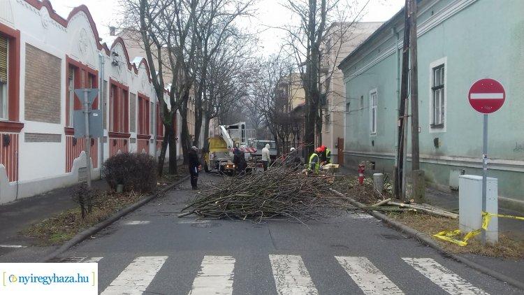 Favágási munkálatokat végeznek kedden a NYÍRVV munkatársai a Deák Ferenc  utcán