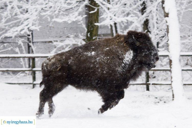 Télen is érdemes kilátogatni a Nyíregyházi Állatparkba – Különlegességek most is vannak