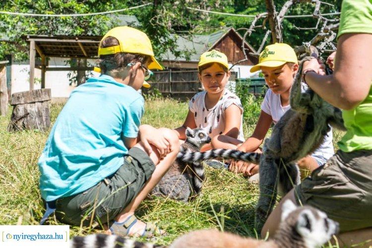 Több száz gyermek töltődik fel az állati jó programok közben a Zoo-Suliban
