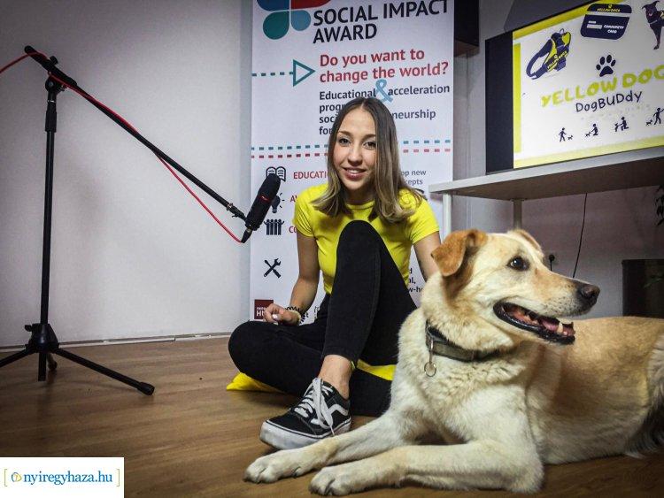Yellow Dogs – Nyíregyházi kutyabarát országos közönségdíja egy újszerű projekttel