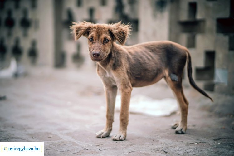 Nyíregyháza összefogott – Megmenekülnek a Keleti lakótelep kutyái