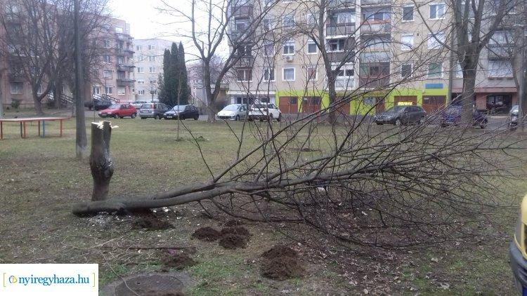Örökösföldön rongáltak fákat, facsemetéket – Keresik az ismeretlen tetteseket