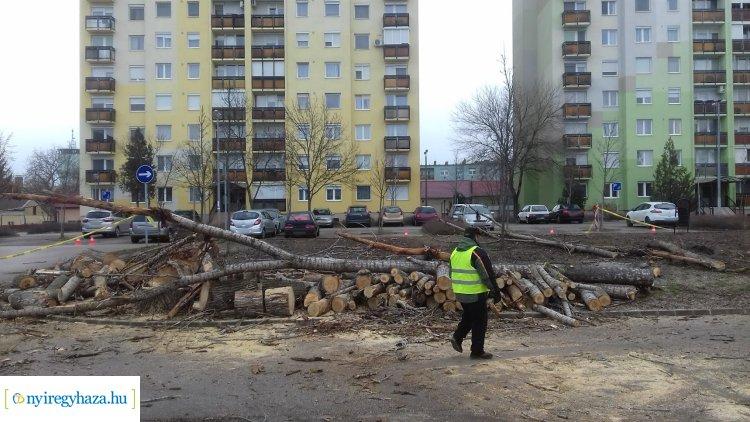 Harmadik alkalommal, de sikerült a Toldi úti fák kivágása – Délutánra befejezik a munkákat