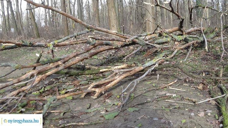 Erdei tanösvényre dőlt ki csütörtökön egy kiszáradt fa a Sóstói-erdőben