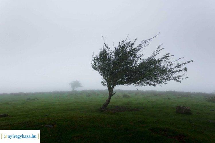 Péntekre több megyében másodfokú riasztások a viharos szél miatt