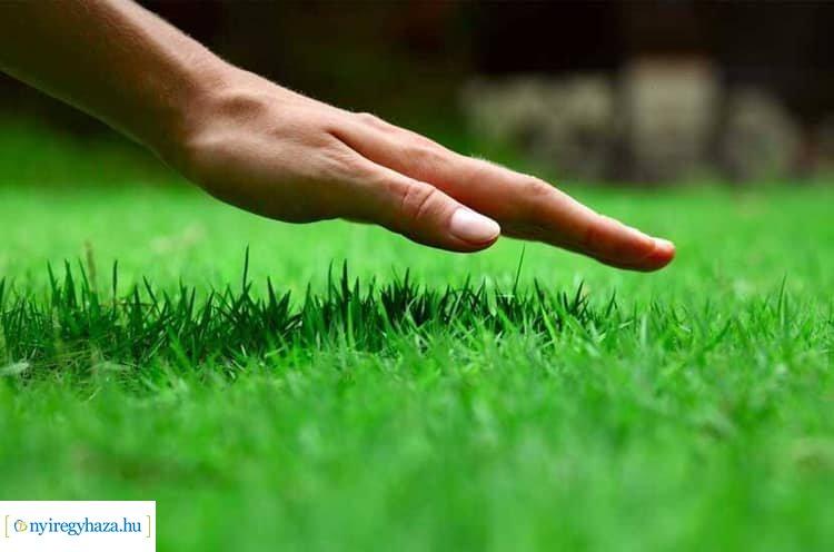 A szomszéd fűje mindig zöldebb – Ingyenes városszépítő programot hirdet a NYÍRVV