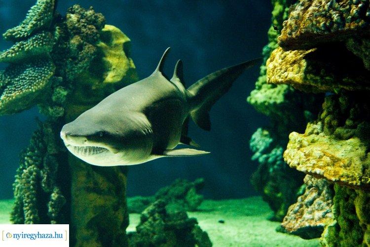 India-ház épül a Nyíregyházi Állatparkban, lesznek benne cápák is!