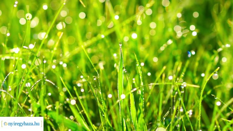 """Bizonytalan ideig elmarad a """"Szomszéd fűje mindig zöldebb"""" füvesítési akció elbírálása"""