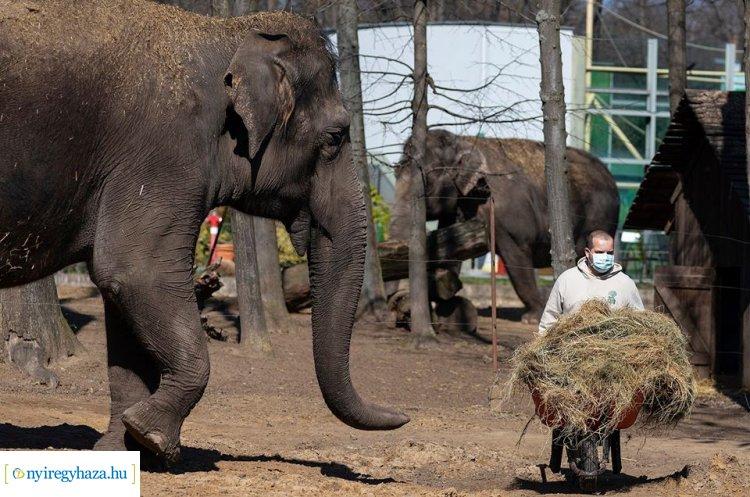 ZooTv – Így telnek a mindennapok látogatók nélkül a Nyíregyházi Állatparkban
