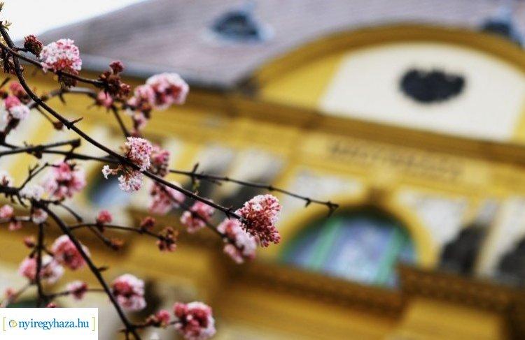 Kezdődjön tavaszi virágválogatással a nap – Ilyen a tavasz Nyíregyházán!