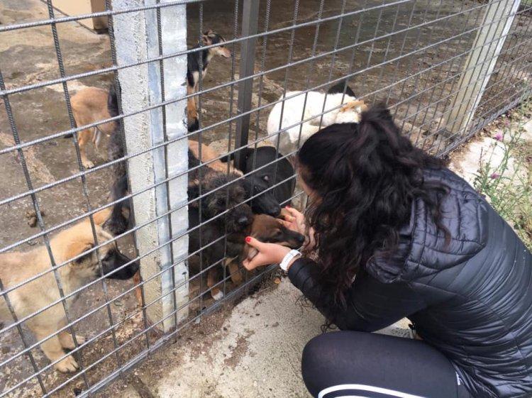 Pórázt fogott a nyíregyházi atléta - Kerekes Dóra a kutyákon próbál segíteni