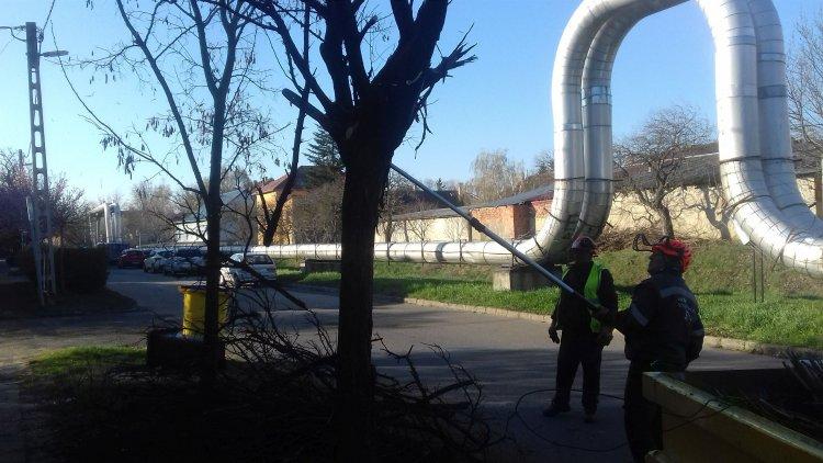 Kiszáradt fákat vágnak ki - Munkálatok a Toldi és a Tűzoltó utcán