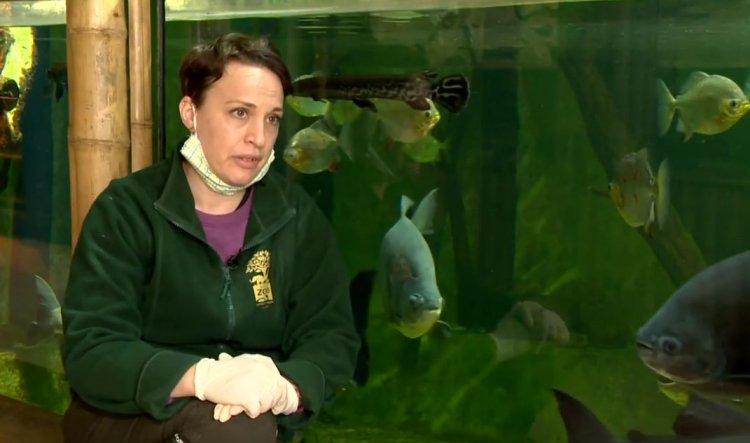 Ideiglenesen nem látogatható Magyarország legnépszerűbb állatparkja a Sóstó Zoo
