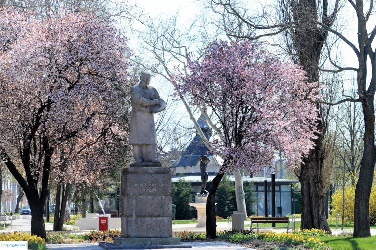Virágba borult a belváros - Csodálatos látvány az arra közlekedőknek