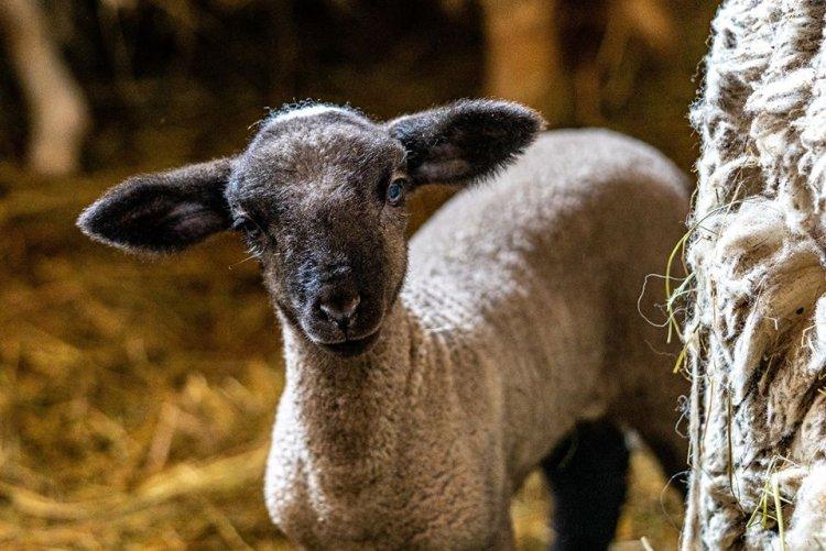 Húsvéti hangolódás a Nyíregyházi Állatparkkal – Csodás fotókon a Parasztudvar lakói!