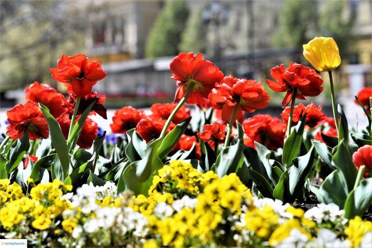 Ilyen a tavasz Nyíregyházán! Gyönyörködjön friss galériánkban!