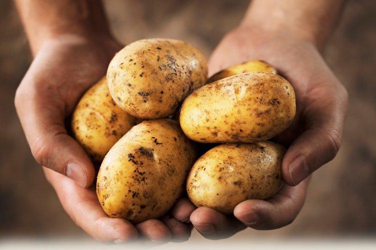 Ezen a napon: Krumpli hamisitás! – A Nyírvidék híre 1905. április 23-án