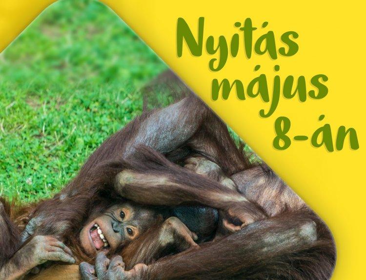 Május 8-án nyit a Nyíregyházi Állatpark – Itt vannak a részletek!