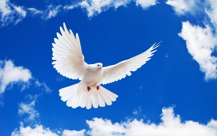 Pünkösd van! A keresztény világ a Szentlélek eljövetelét ünnepli!