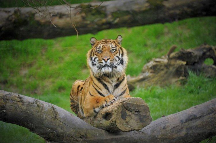 Itt a jó idő, irány a Nyíregyházi Állatpark – Hasznos információk pünkösd hétfőre