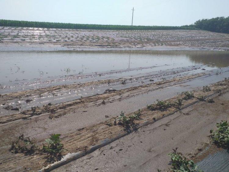 Kárt okozott a sok eső! Víz alatt a dinnyeföld Nagycserkeszen!